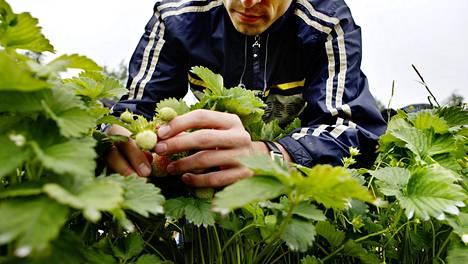 Maatalous on harvoja aloja, joilta työttömiksi joutuneet ulkomaalaiset voisivat nyt löytää töitä. Töiden saaminen on kuitenkin ollut kiven alla, koska maatilat haluavat kausityöntekijöitä ulkomailta, etenkin Ukrainasta. Hallitus on toistaiseksi sallinut 4 500 kausityöntekijän tulemisen.