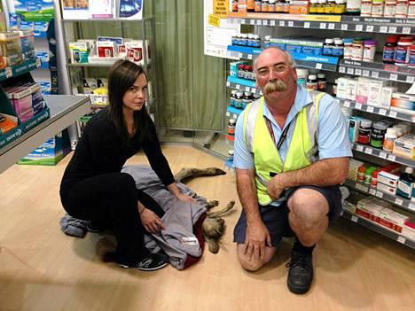 Wildlife Victorian vapaaehtoiset Ella Roundtree (vas.) ja Geoffrey Fuller pyydystetyn kengurun kanssa.