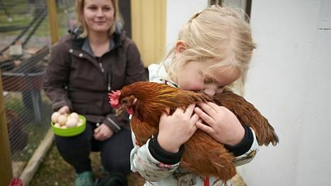 Tuusulalainen Kaitlin Holland pitää hyvänä kotipihan kanaa, jolta on kerätty juuri munia.