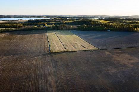 Sadat tuhannet valkoposkihanhet pysähtyvät kevätmuuttomatkallaan tankkaamaan pelloille ja syövät kaiken orastavan kasvuston. Maanviljelijä Sakari Paakkisen kuminapellot on syöty. Ainoastaan pieni heinälohko on jäänyt syömättä Parikkalan Jyrkilässä.