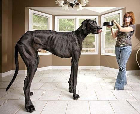 Isoin Koira