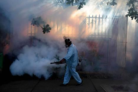 Zikavirusta, denguekuumetta ja chikungunyaa pyrittiin ehkäisemään myrkyttämällä hyönteisiä Nicaraguan pääkaupungissa Managuassa tammikuussa 2016.