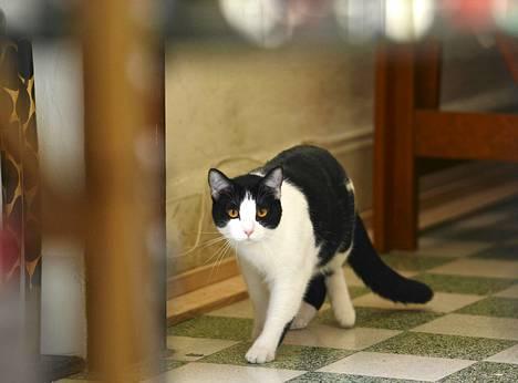 Morris-kissa ei ole vaalien virallinen ehdokas, mutta sen odotetaan saavan ainakin paljon protestiääniä.