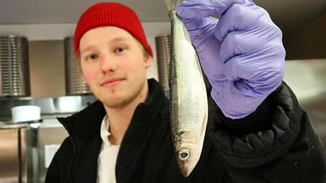 """Helsinkiläisen Stockmannin Herkun kalatiskiltä löytyi samana aamuna tullutta silakkaa. Kalanmyyjä Rasmus Palmrothin mukaan kysyntä on """"vaihtelevaa"""". Kokonaista silakkaa ostavat hänen mukaansa etenkin iäkkäämmät asiakkaat. Enemmän kysyntää on silakkafileellä"""