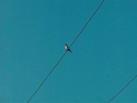 Tacita Dean: Korvamato, 2017 (pysäytyskuva). Puhelinlangoilla istuvat linnut saivat Deanin laulamaan Leonard Cohenin kappaletta Like a Bird on a Wire. Teoksessa lintu istuu langalla täsmälleen laulun keston ajan.