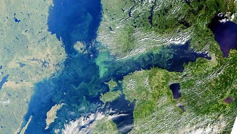 Syken maanantainen satelliittikuva näyttää, kuinka sinilevä on vallannut Suomenlahden ja erityisesti Suomen rannikon.
