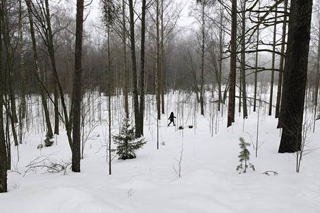 The nature management plan would prune the woodpecker of this meadow along the New Zealand and remove small trees.  Individual large trees would also be felled.