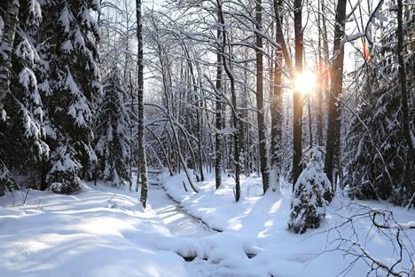 Metsät ovat Suomen tärkein hiilinielu. Ilmastopaneelin mukaan metsänomistajille pitäisi luoda kannusteita metsien kasvattamiseen.