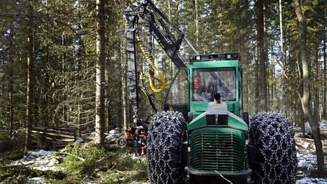 Metsä Groupin biotuotetehtaalle tulee raaka-ainetta metsästä Uuraisilla.