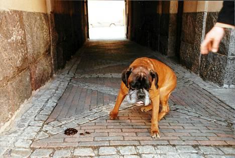 Espanjan Brunetessa koirankakkaongelman kimppuun käytiin markkinointikampanjalla.