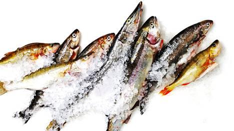 Tutkimustuloksista käy ilmi, että viljeltyjen kalojen hygieeninen laatu oli parempi kuin luonnosta pyydettyjen kalojen.