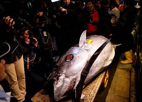Toimittajat kuvasivat 278-kiloista sinievätonnikalaa, joka myytiin noin 2,7 miljoonalla eurolla lauantaina Tokiossa.