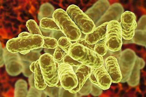 Suurin osa superbakteereista on kehittänyt vastustuskyvyn ainakin yhdelle antibiootille, jota käytetään tavallisesti bakteerin hoitoon. Taiteilijan näkemys superbakteerista.