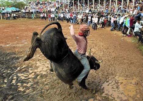 Mies ratsastaa härällä osana Nueva Guinea -nimisen nicaragualaiskaupungin 50-vuotisjuhlallisuuksia sunnuntaina.