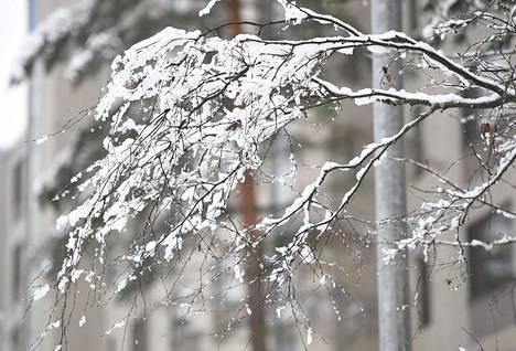 Koko maahan on tänä vuonna luvassa valkea joulu. Jouluaattona lunta satelee Lapissa ja Pohjois-Pohjanmaalla, joulupäivänä lännestä leviää lumisateita koko maahan.