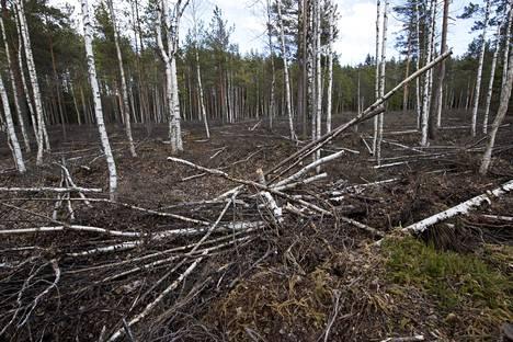 Puusto poistetaan ja ojat tukitaan, jotta suon vesitalous palaa ennalleen.