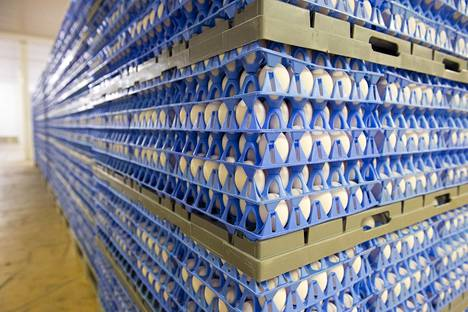 Kananmunien kulutus kasvaa Suomessa.