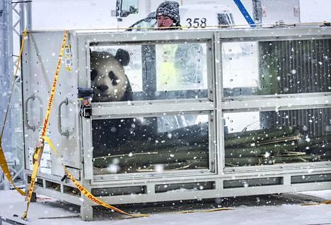 Panda kuljetuslaatikossaan Helsinki-Vantaan lentokentällä.