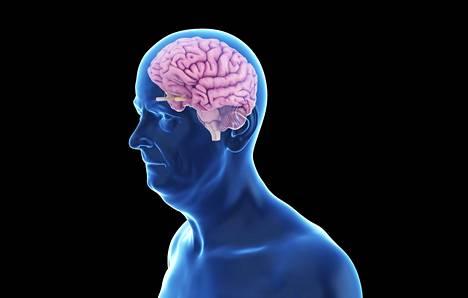 Aivot uusiutuvat joidenkin tutkimusten mukaan jopa pitkälle eläkeikään.