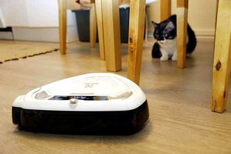 Hippu-kissa suhtautui äänekkääseen vieraaseen epäluuloisesti.