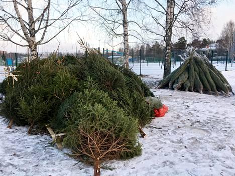 Myymättömiä joulukuusia Matinkylän Urheilupuiston vieressä Espoossa tapaninpäivänä.