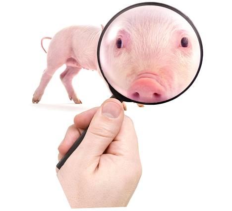 Sikoja muuntavan yhtiön kokeissa siat ovat olleet immuuneja vaikean virustaudin muunnoksia vastaan.