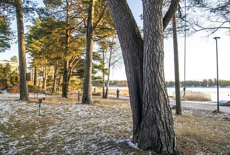 Aivan Tavallisten Puiden Sekaan Maastoutuu Espoossa Harvinaisia