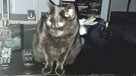 Pökö-kissa oli Kaj Erosen mukaan täysin terveen oloinen ennen kun se karkasi ikkunasta Hyvinkäällä.