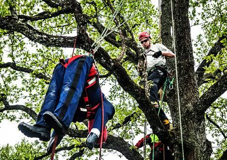 """Yhtenä kisatehtävänä oli loukkaantuneen """"Raimon"""" pelastamisen puusta. Joensuulainen Teemu Koponen osallistui puukiipeilyn SM-kisaan nyt toista kertaa. """"Puukiipeilyssä on koko ajan uutta opittavaa ja tekniikkaa voi aina parantaa. Se tekee siitä mielenkiintoisen."""""""