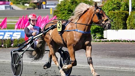 Iikka Nurmosen ajama Polara oli paras suomenhevosista ja sijoittui viidenneksi.