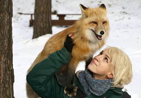 Rojev Rušey eläintarhan työntekijä Vlada Zapolskaja esittelee kesyä Ralf-kettua siperialaisessa Krasnojarskissa. Eläintarhan mukaan kesyyntynyt kettu on novosibirskilaisen tutkimuslaitoksen 50 vuoden jalostustyön tulos.