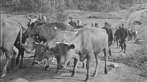 Sotavangit ajoivat suomalaisten sotilaitten kanssa sotasaaliskarjaa Rautalahden motista elokuussa 1941.