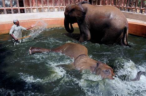 Pakistanilaisen Karachin eläintarhan elefantit Madhubala (seisomassa) ja Malka nauttivat kylvystä eläintenhoitaja Samiullahin valvonnassa maanantaina.