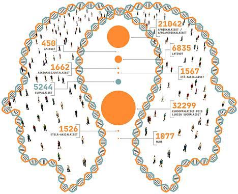 Luvut kertovat geneettisestä tietokannasta löytyvien ihmisten määrät. Lähde: The Genome Aggregation Database (gnomAD)