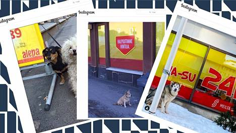 Helmikuussa Instagramiin perustetun Koirat Alepan edessä -tilille kuvataan koiria, jotka odottelevat omistajiaan.