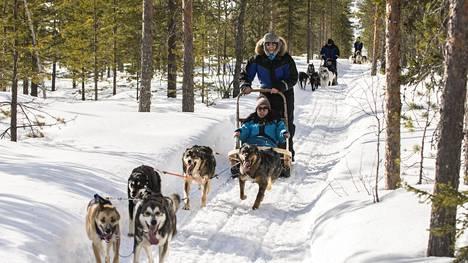 Lappiin houkuteltiin ensiksi turisteja. Nyt kun heitä on alkanut tulla, Lappiin pitää houkutella maakunnan ulkopuolelta myös työvoima turisteja palvelemaan. Samaan aikaan Lapin työttömyysprosentti on suurempi kuin koko Suomen. Kuvassa turisteja Rovaniemellä koiravaljakkoajelulla.