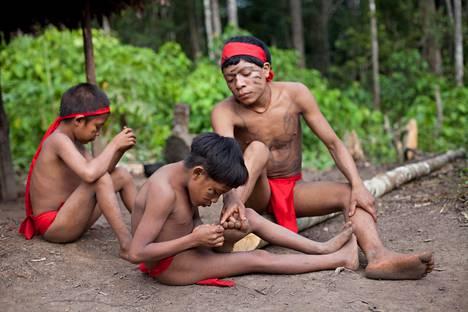 Yanomami-intiaanipoika poisti punkkia toisen pojan jalasta Irotatherin yhteisössä Venezuelassa.