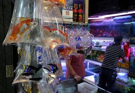 Eläviä kaloja myytiin vesitäytteisissä muovipusseissa Hongkongissa lokakuussa 2019.