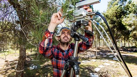Amnon Cochavi mittaa kuinka paljon Yatirin metsän alepponmännyt imevät hiilidioksidia.