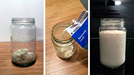 Kefiirisienestä syntyy hapattamalla piimän kaltainen juoma, joka sisältää eläviä maitohappobakteereita.
