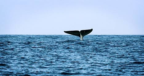 #whalingin loppuosuus näyttäisi tältä. Kuivalla maalla haastavaa.