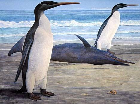 Taiteilijan näkemys Uudesta-Seelannista löytyneestä pingviinifossiilista höyhenpuvussaan.