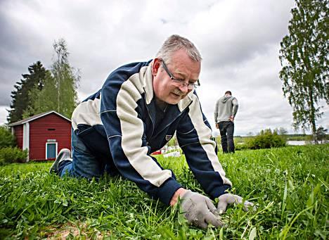Iisalmelainen Raimo Vaarasuo kaataa lasiin juuri valmistettua ketunleipälassia.