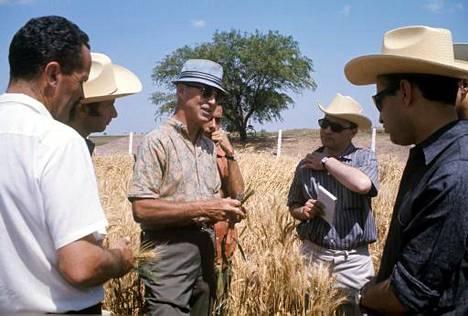 Yhdysvaltalainen kasvitieteilijä Norman Borlaug (keskellä) tunnetaan vihreän vallankumouksen isänä. Hän sai Nobelin rauhanpalkinnon vuonna 1969.