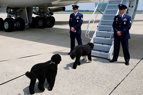 Yhdysvaltain presidentti Barack Obaman koirat Sunny (vas.) ja Bo nousivat lentokoneeseen Marylandissa lauantaina. Presidenttiperhe matkasi jokavuotiselle lomalleen Martha's Vineyardiin Massachusettsiin.