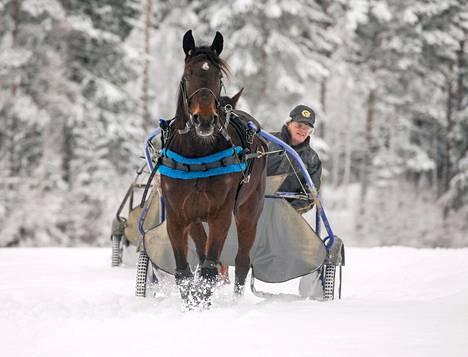 Lumessa juokseminen vahvistaa Suomen parhaan lämminveritamman Venicen lihaksistoa. Rattailla hevosen valmentaja ja omistaja Heikki Korhonen.