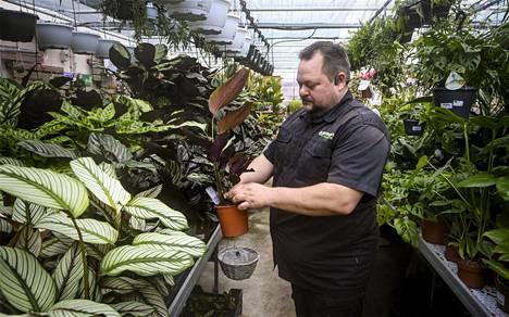 Neljännen polven puutarhakauppias Sam Johansson kertoo, että Calathea-perhe on tällä hetkellä erityisen suosittu. Johansson kuvattuna Pukinmäen puutarhassa Helsingissä 9. huhtikuuta.