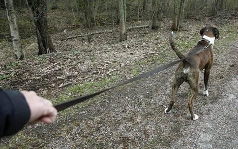 Koirista tehdään SEY:lle eniten ilmoituksia todennäköisesti siksi, koska ne ovat lemmikeistä eniten ihmisten nähtävillä.