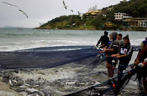 Kalastajat vetivät kalaverkkoa merestä Garopabassa Brasiliassa syyskuussa 2019.