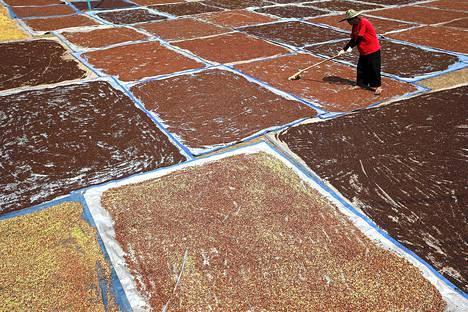 Maanviljelijä käytti haravaa kuivatakseen neilikoita Länsi-Jaavalla Indonesiassa tiistaina. Neilikkaa käytetään usein paikallisesti tuotetussa tupakassa.